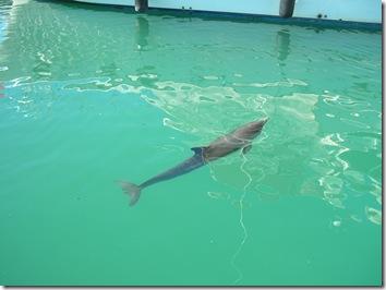 dolphin 001