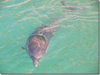 dolphin 005