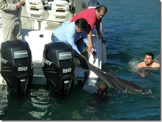 dolphin 011