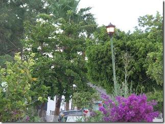 from P Escondido 092