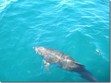 to Puerto Escondido 175