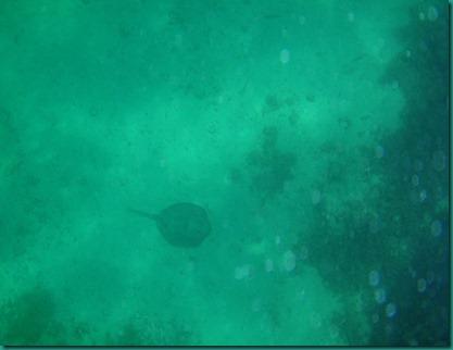 Playa El Burro 082