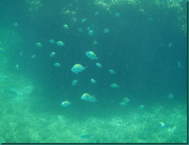 Playa El Burro 099