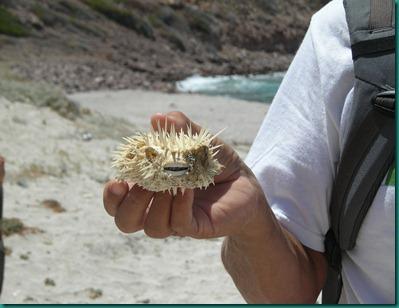 Playa El Burro2 052